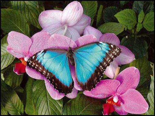 http://soyez-passant.fr.nf/wp-content/uploads/papillon3b1.jpg